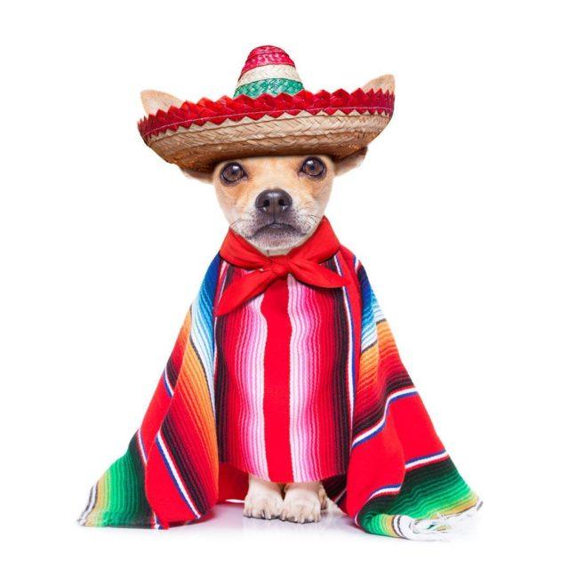 Happy Cinco de Mayo defineplanet defineplanet petsupplies petsupplier dogsupplies poopbagshellip